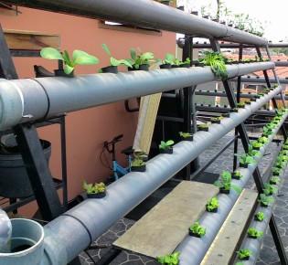 Как собрать гидропонную систему из канализационных труб?