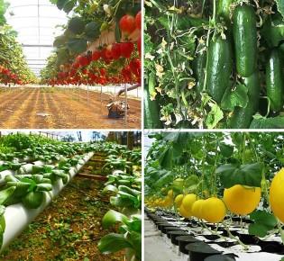 Что представляют собой вертикальные фермы для выращивания овощей?