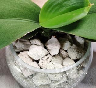 Как применять пеностекло для выращивания орхидей?
