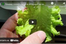 Реалити-шоу part 7 — Почему сохнет салат и петрушка на гидропонике?