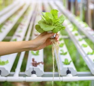 Как выращивать гидропонику?