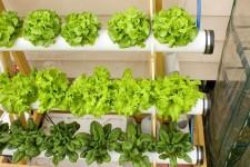 Правила вертикального выращивания зелени