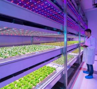 Стартап GrowFlux Филадельфия настраивает освещение для выращивания сельскохозяйственных культур в помещениях