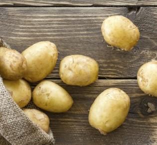 Особенности выращивания картофеля на аэропонике
