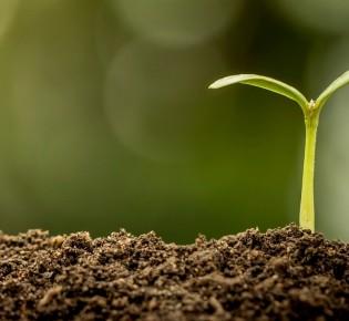Как выращивать растения с помощью Growth Technology?