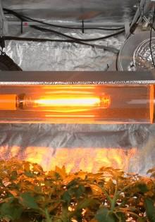 Как организовать освещение в гроубоксе?