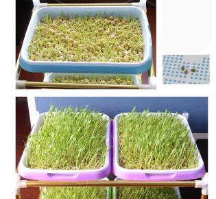 Как прорастить семена на гидропонике?