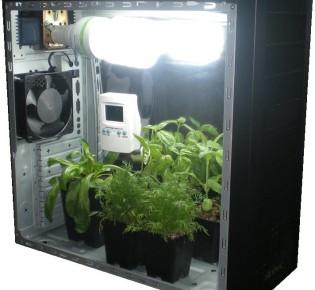 Как выращивают овощи в гроубоксе Стелс?