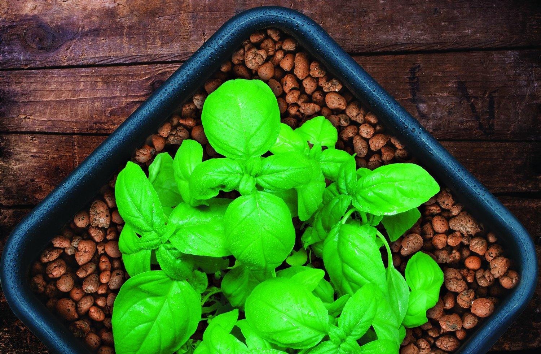 Керамзит для растений