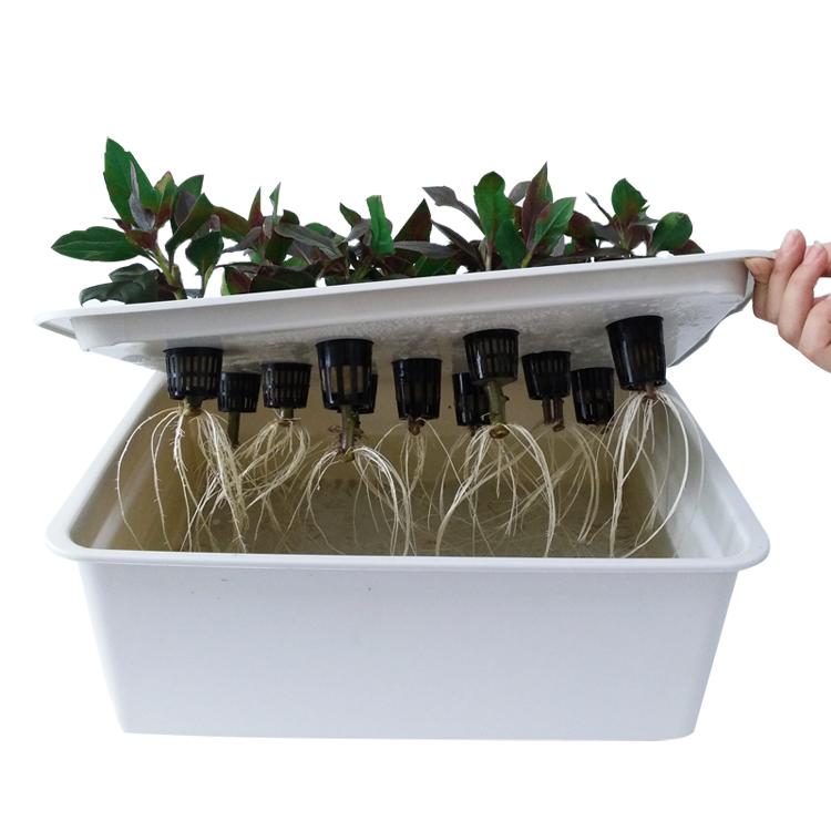 Выращивания растений на жидкой питательной среде DWC