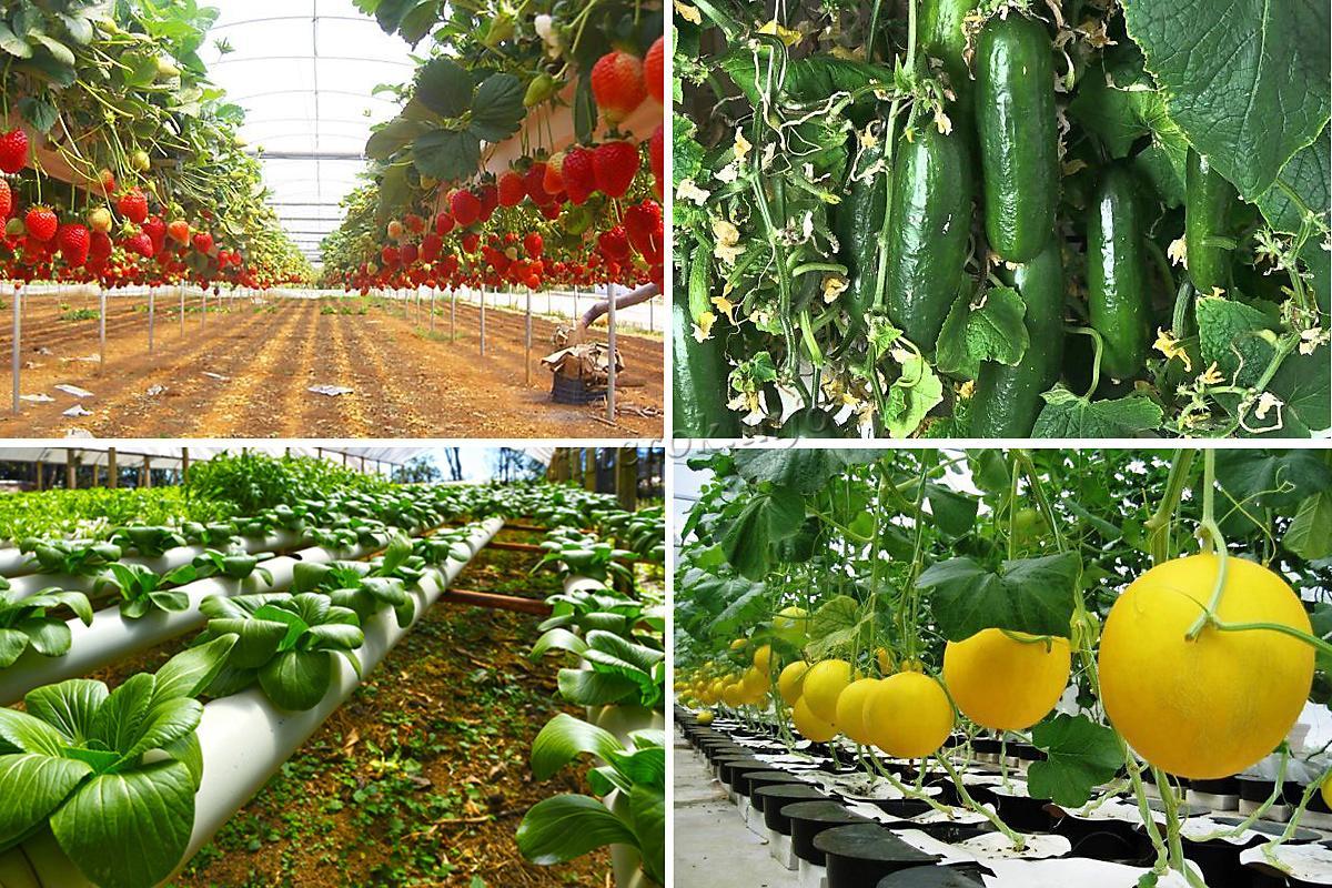 Как выращивать овощи на гидропонике?