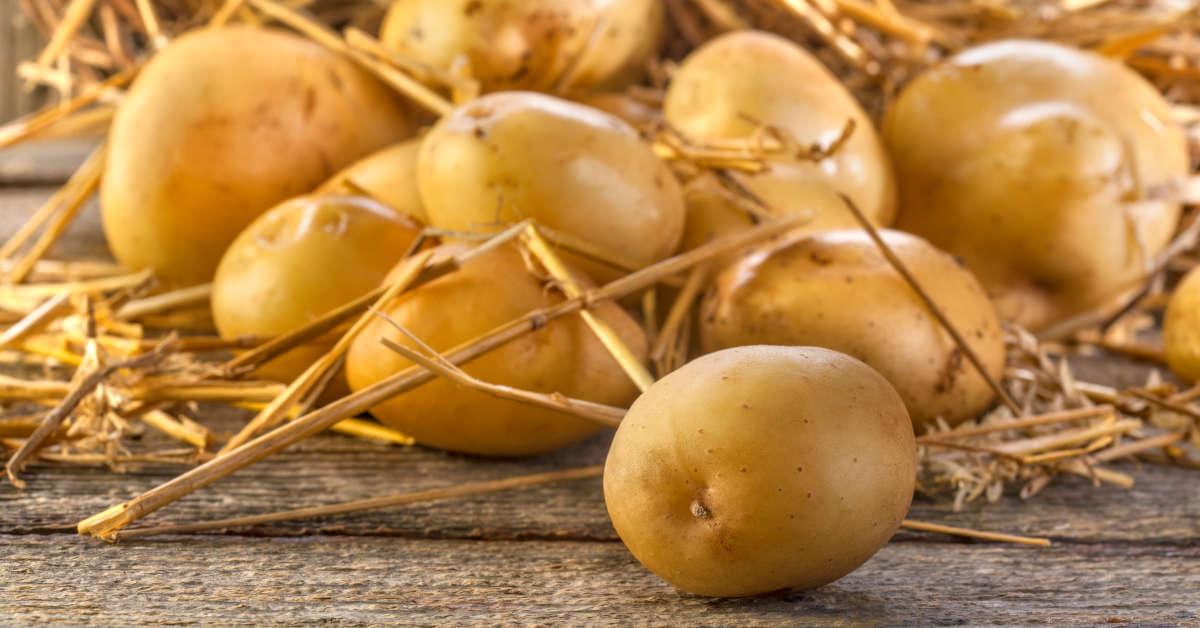 Как вырастить картошку на гидропонике?