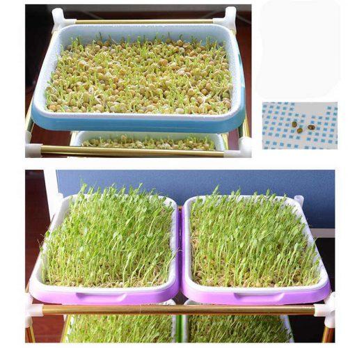 семенами лук на гидропонике