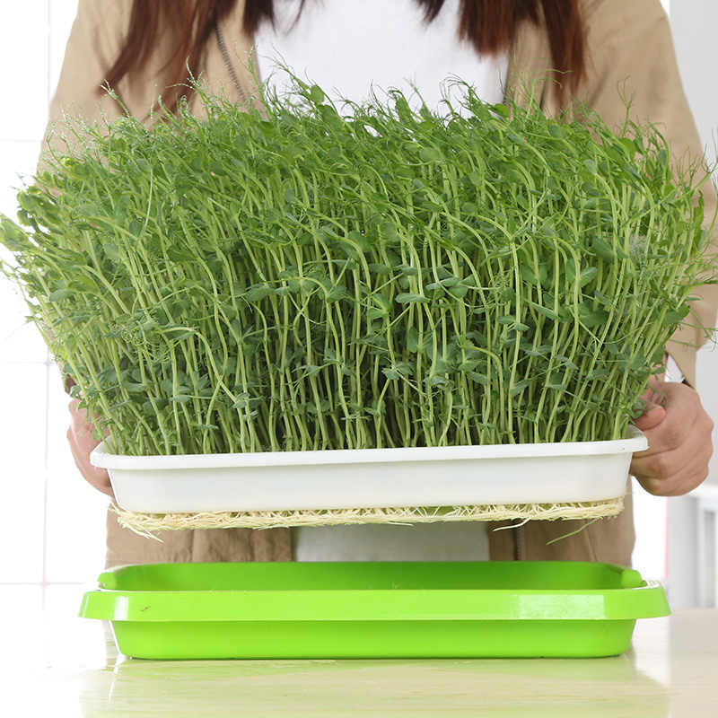 Семена для гидропоники