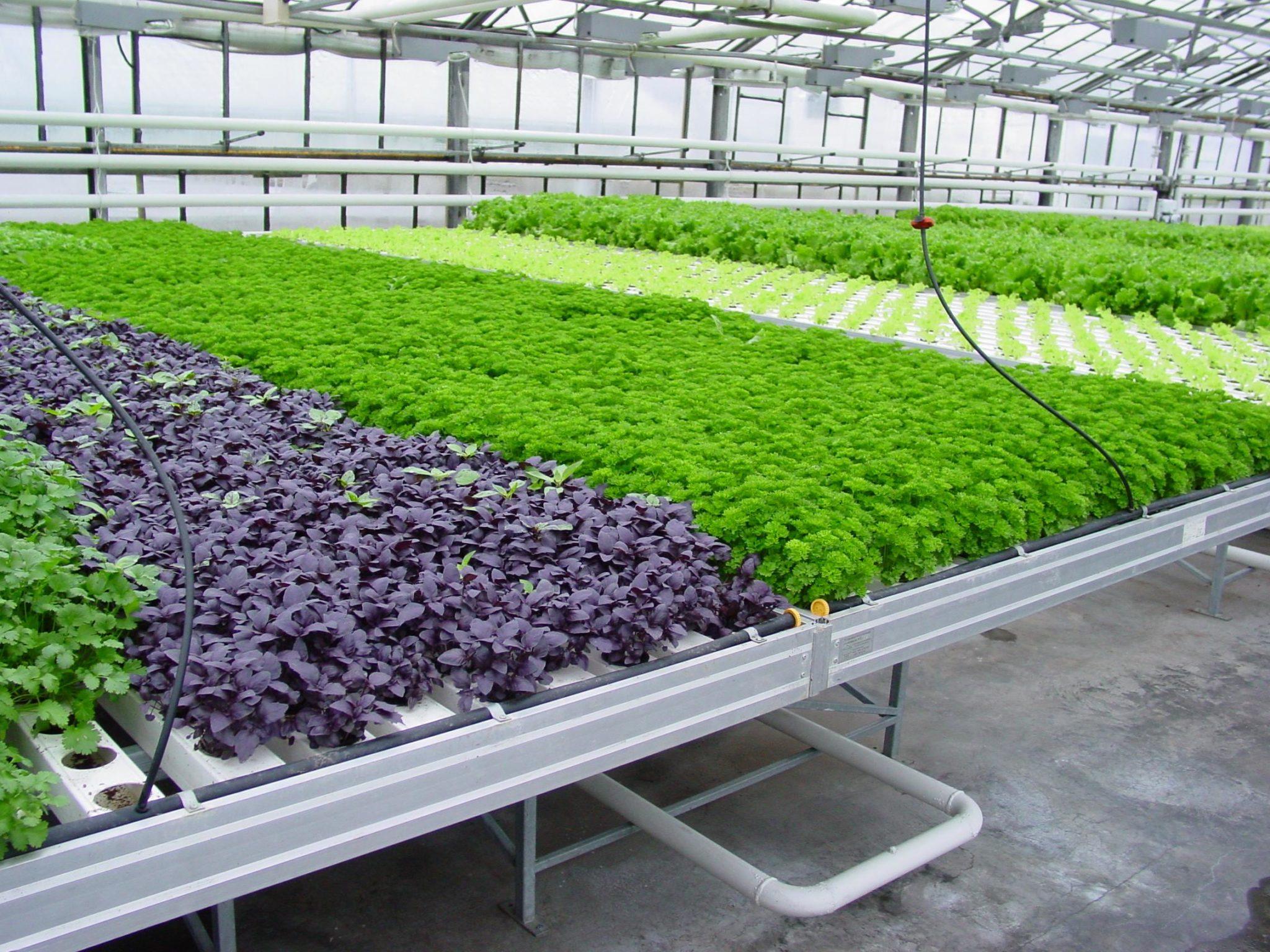 Выращивание зелени на аэропонике