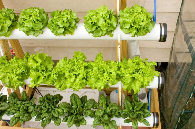 Вертикальное выращивание зелени