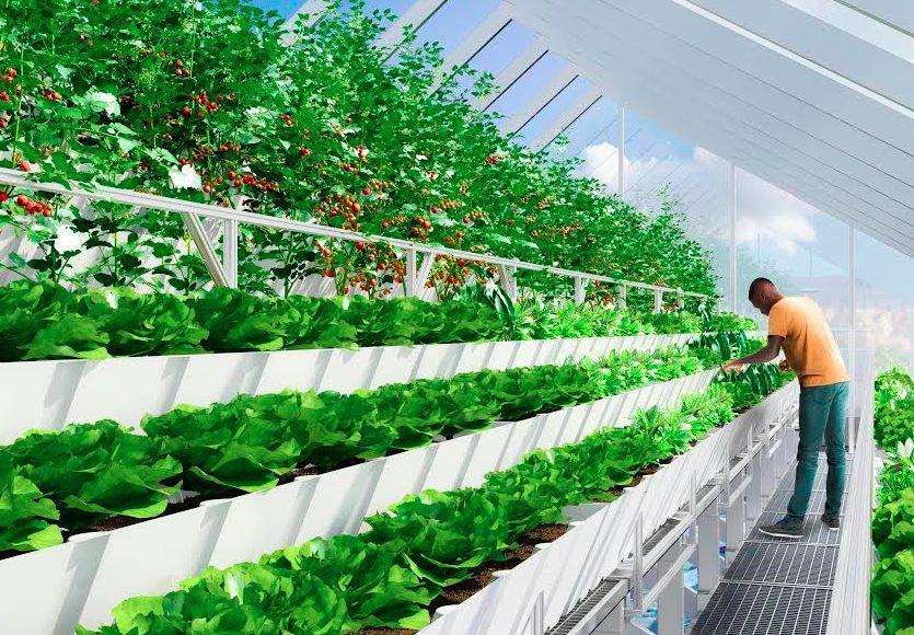 Почему гидропонные фермы всегда в тренде?