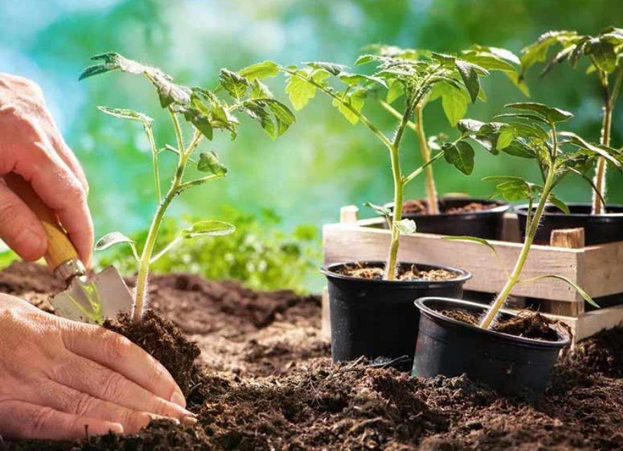 Вермикулит для рассады томатов