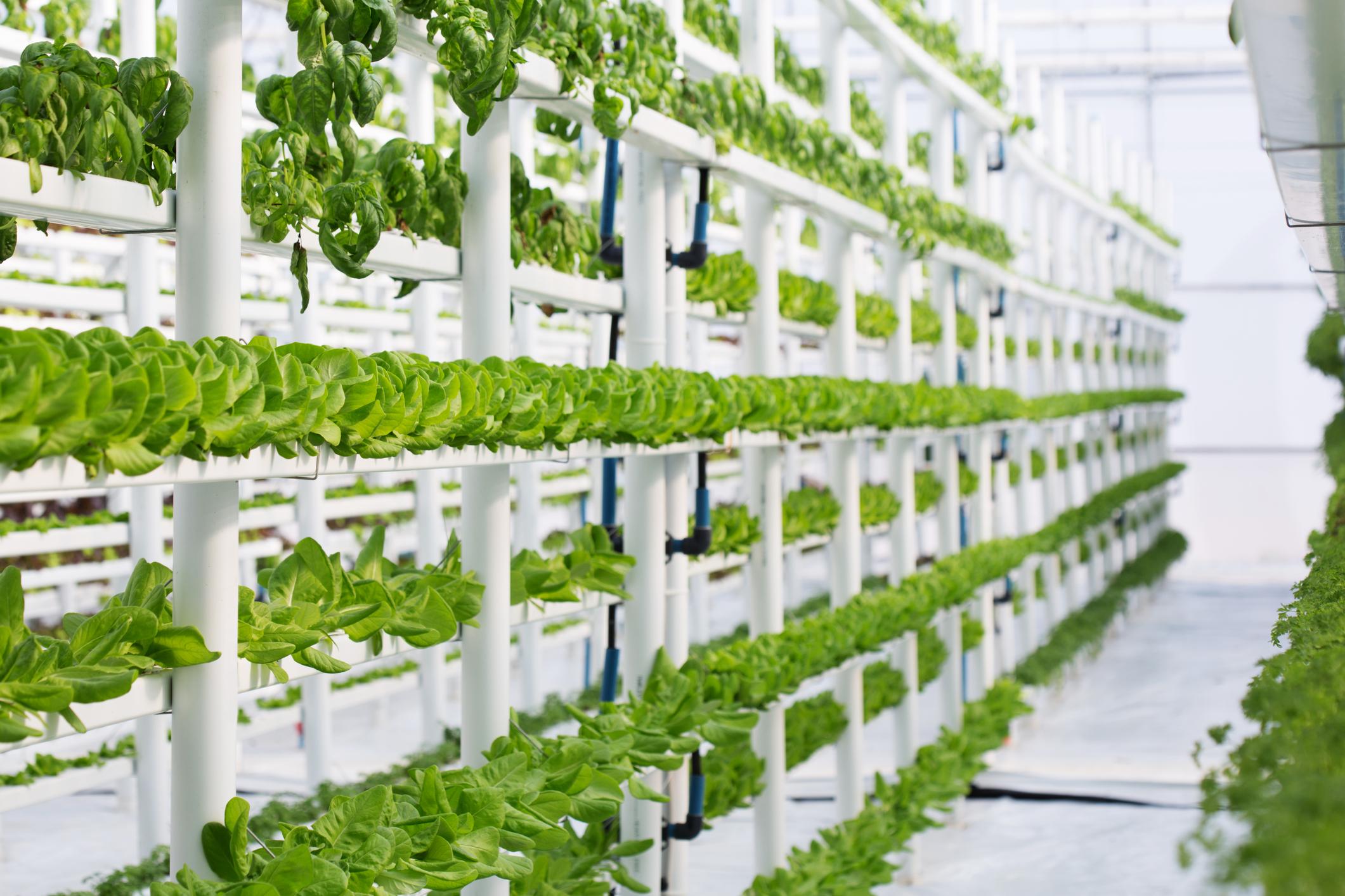 Технология вертикальных ферм