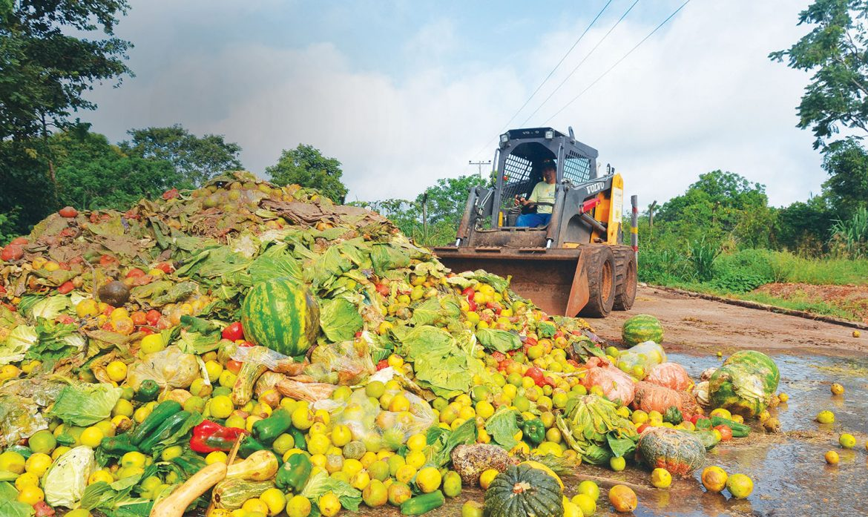 Как городское сельское хозяйство может помочь справиться с пищевыми отходам?