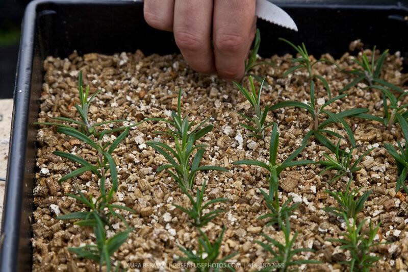 Как применяют вермикулит для растений?