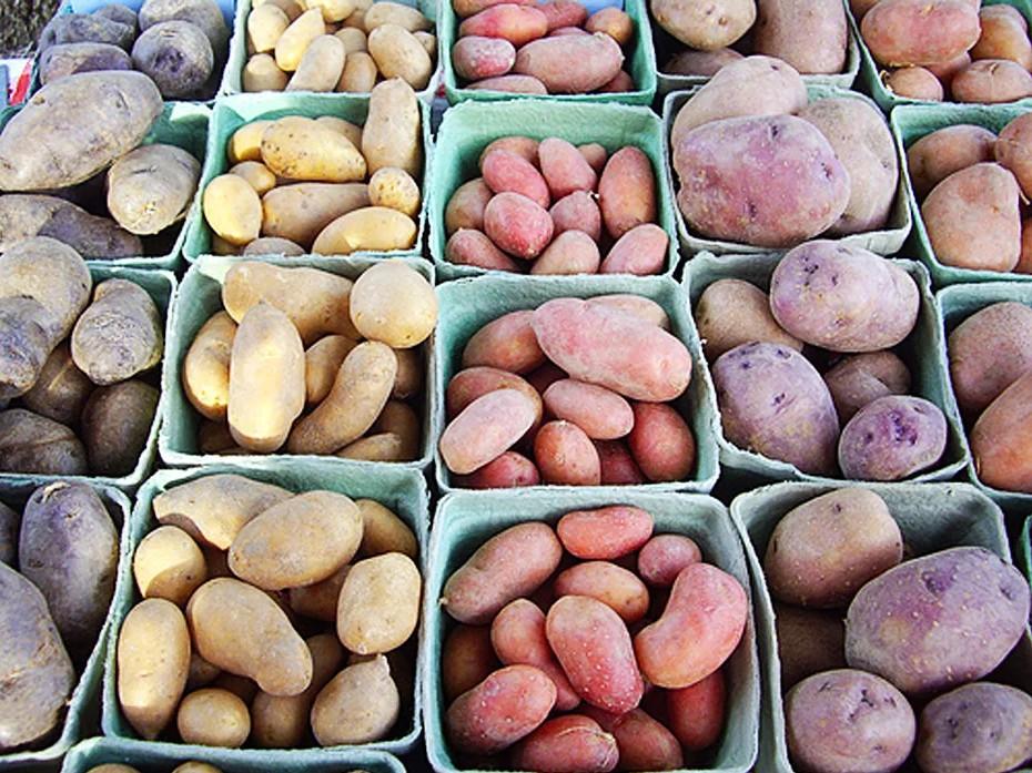 Картофель суперэлита на сити-ферме
