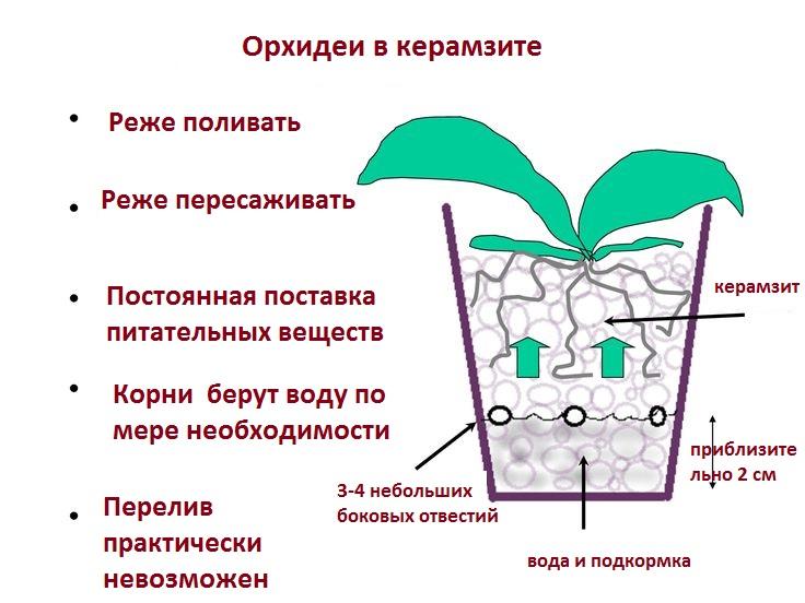 Керамзит для орхидей