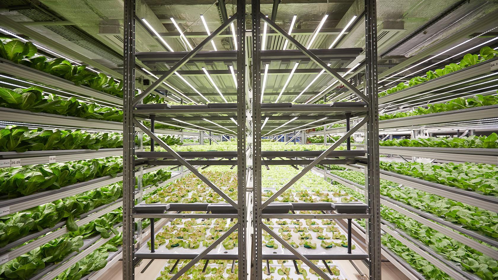 Вертикальная ферма iFarm