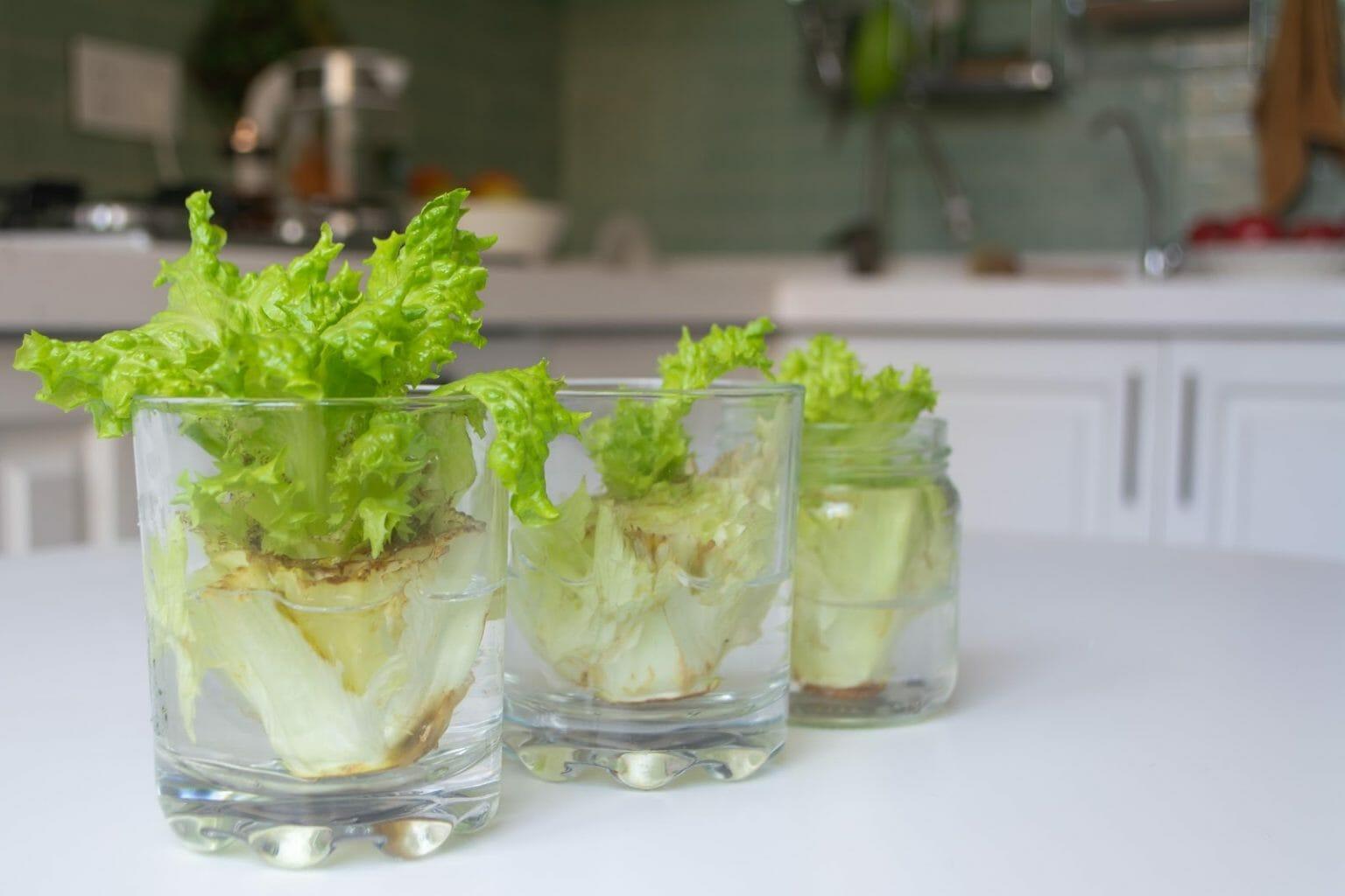 Как овощи и цветы легко вырастить в стакане воды?