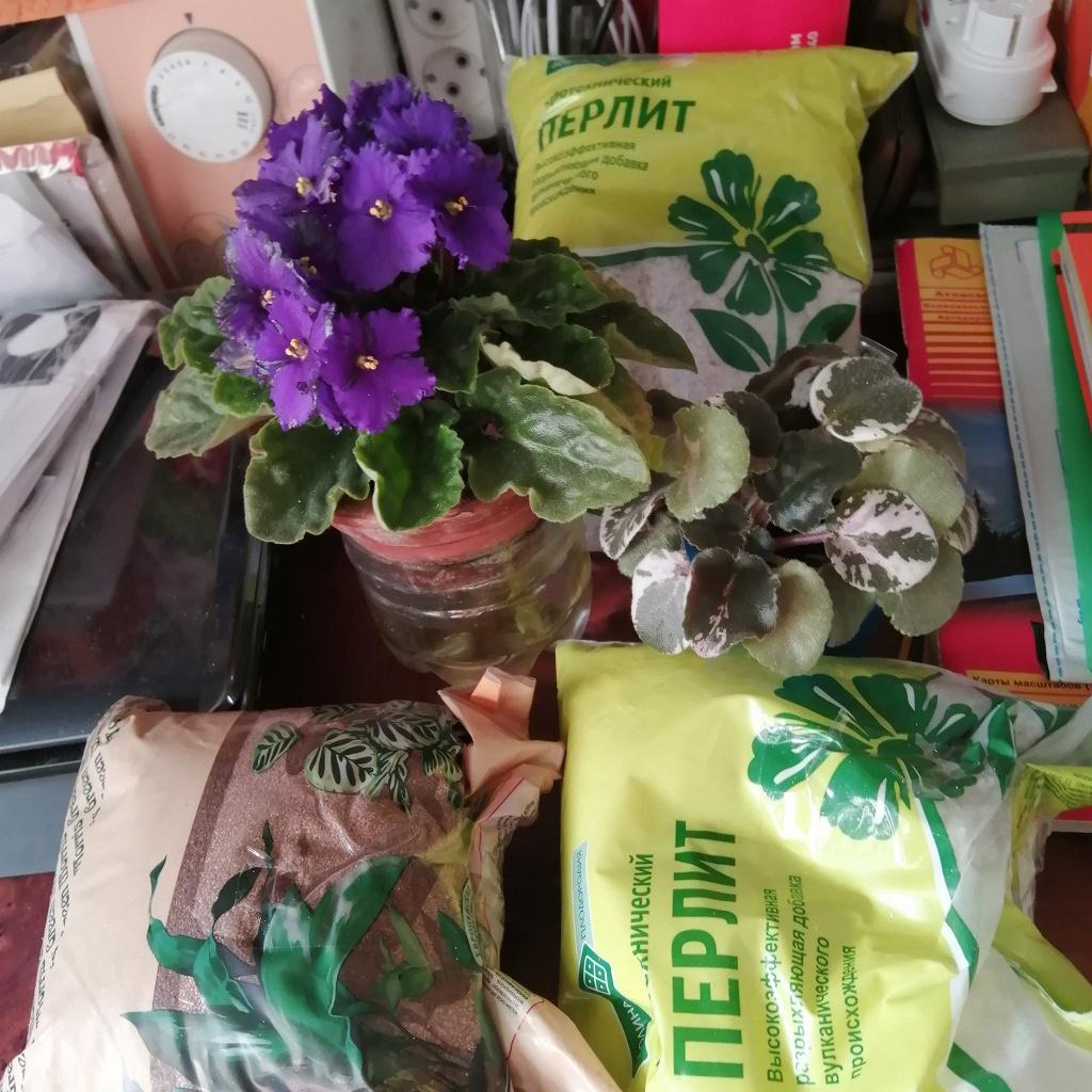 Перлит для комнатных растений
