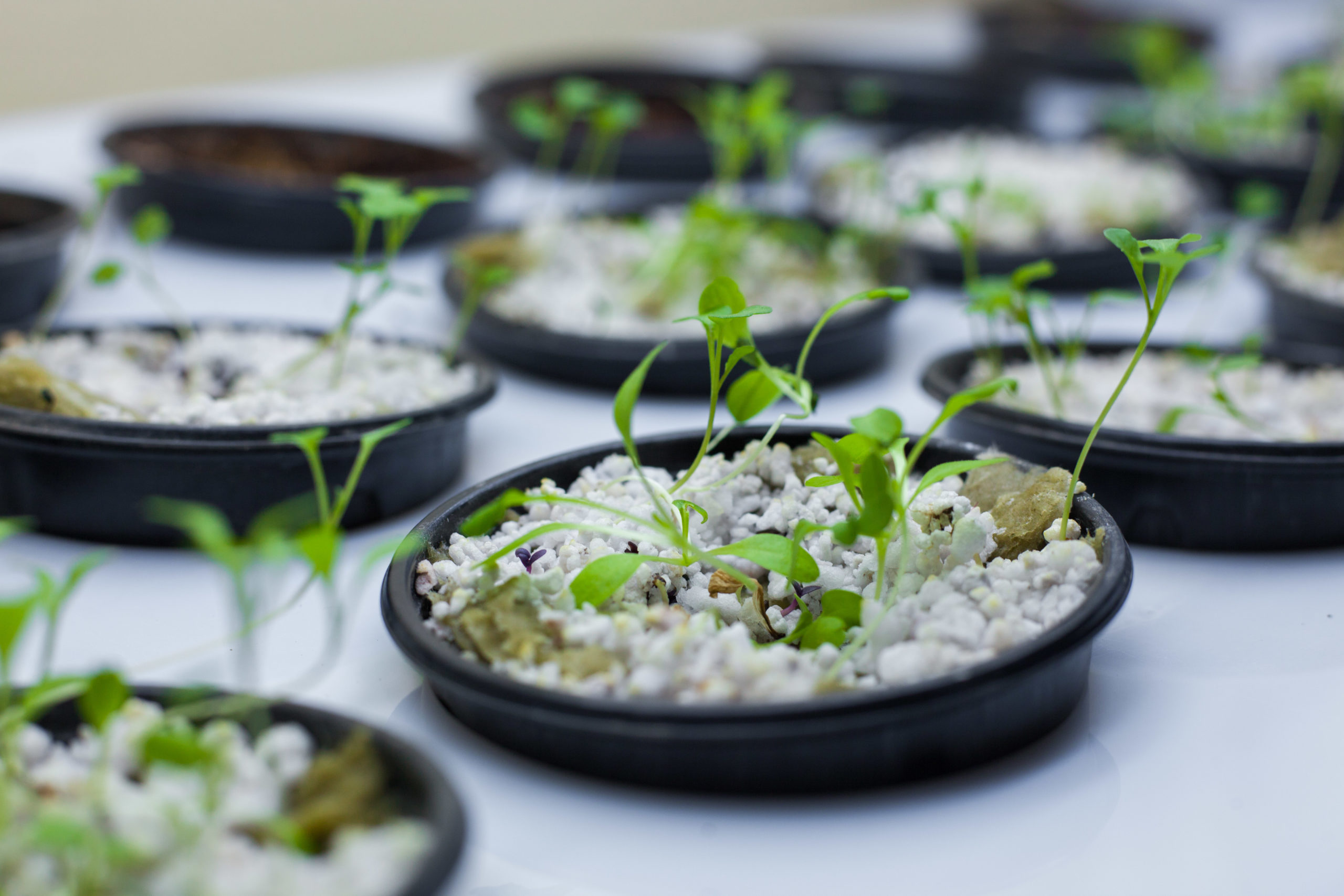 Перлит для растений