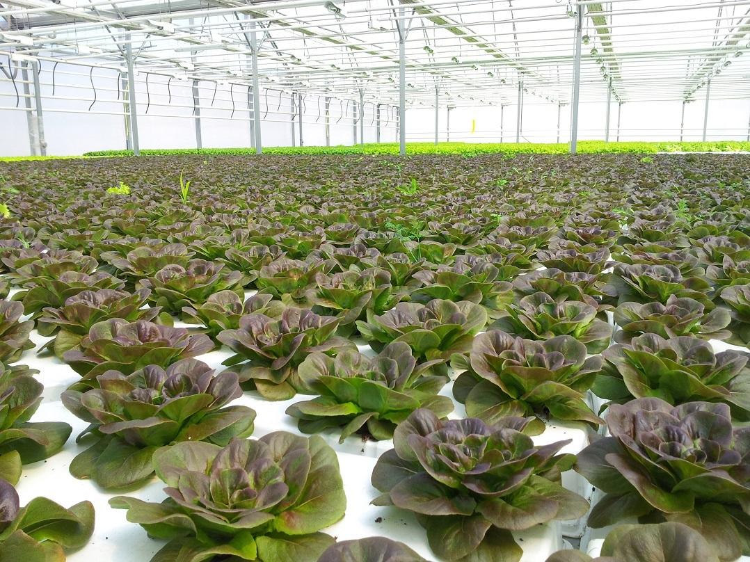 Расширение гидропонной фермы серьёзно затронуло озеро Себу