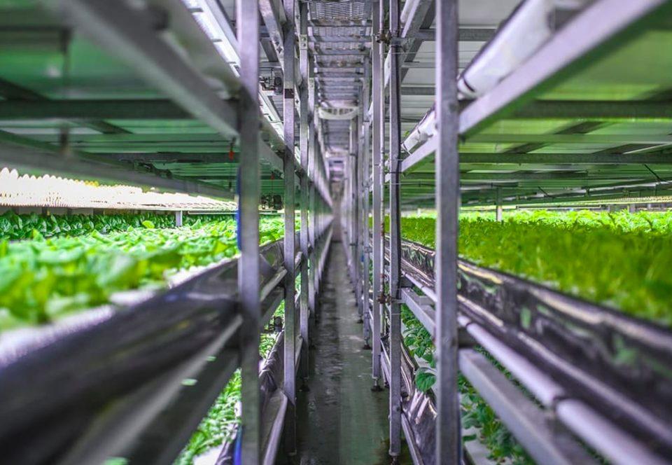 Вертикальная ферма Grönska