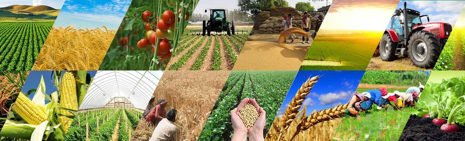 Стандарты вертикального сельского хозяйства или передовые практики?
