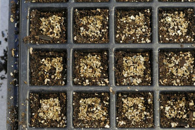 Как проводят посев и выращивают на вермикулите рассаду?