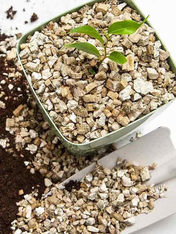 Как применять вермикулит для цветов?