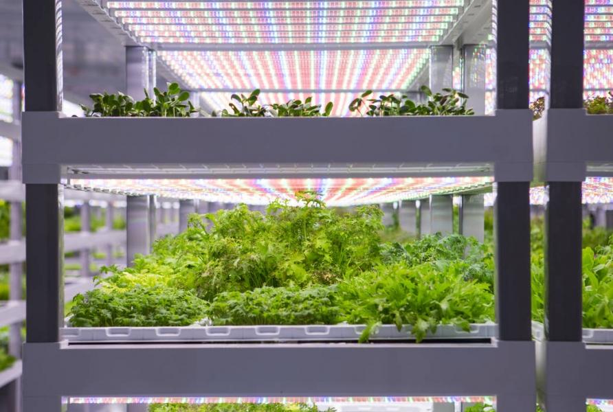 Вертикальная городская ферма Ортализа - витрина в Кингсвилле