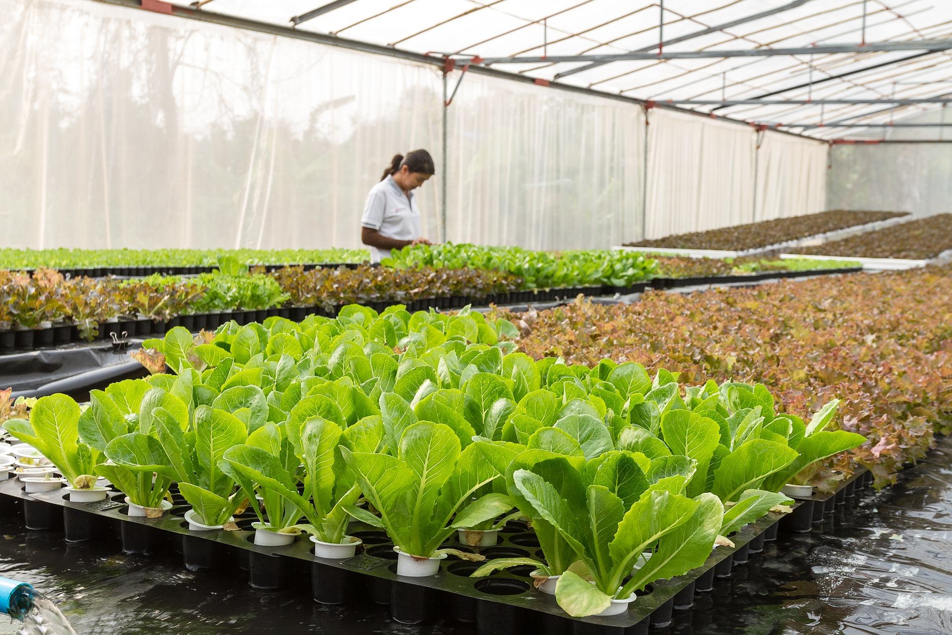 онтроль выращивания с помощью смартфона