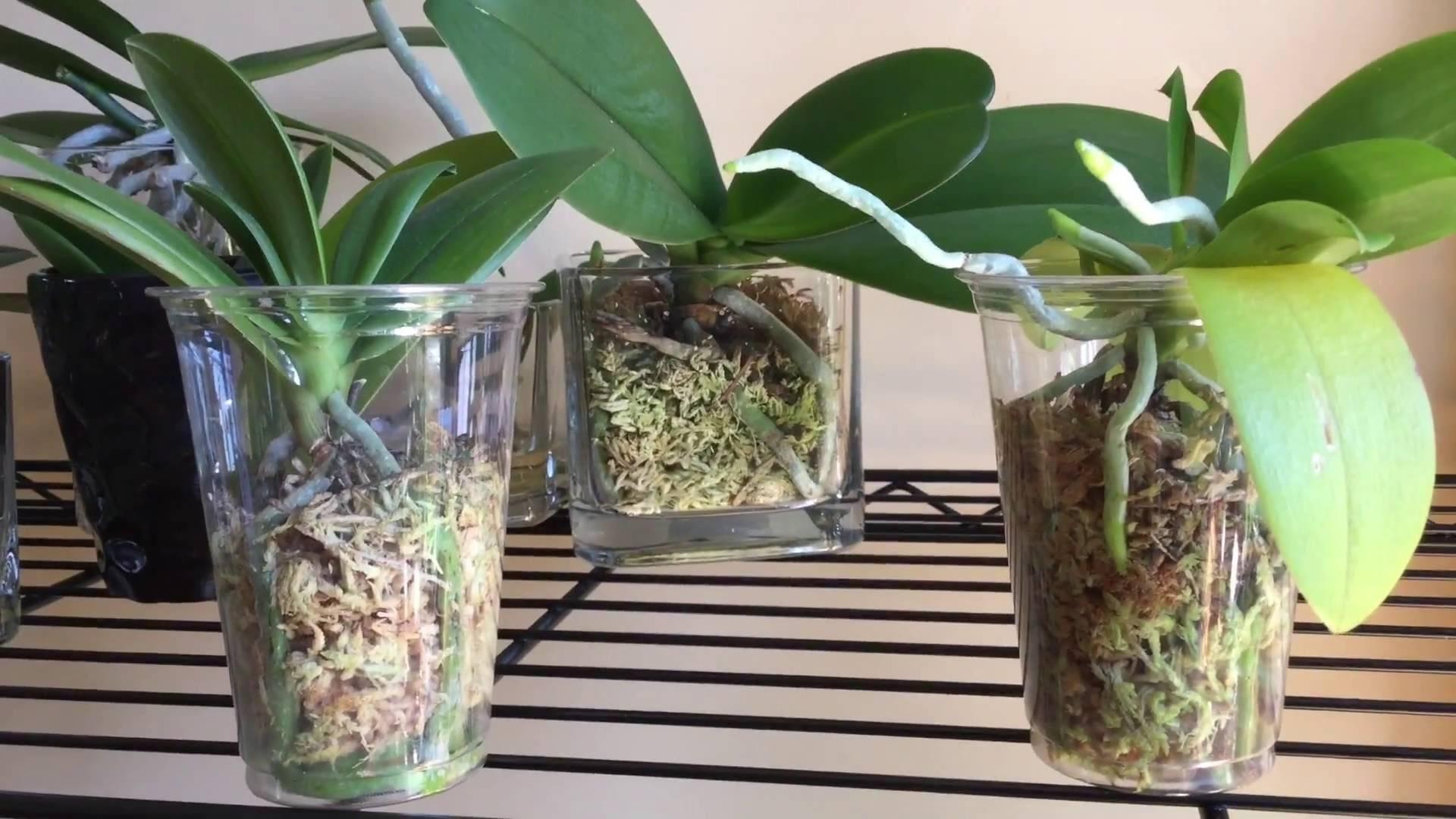 Как использовать вермикулит для орхидей?