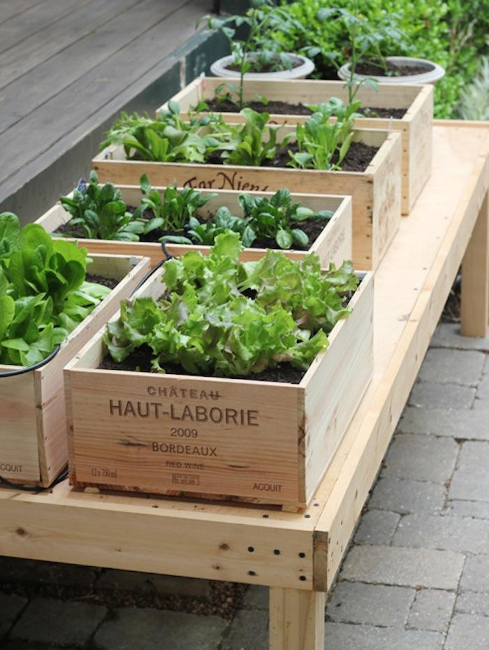 Домашний сад – концепция огорода в ящике