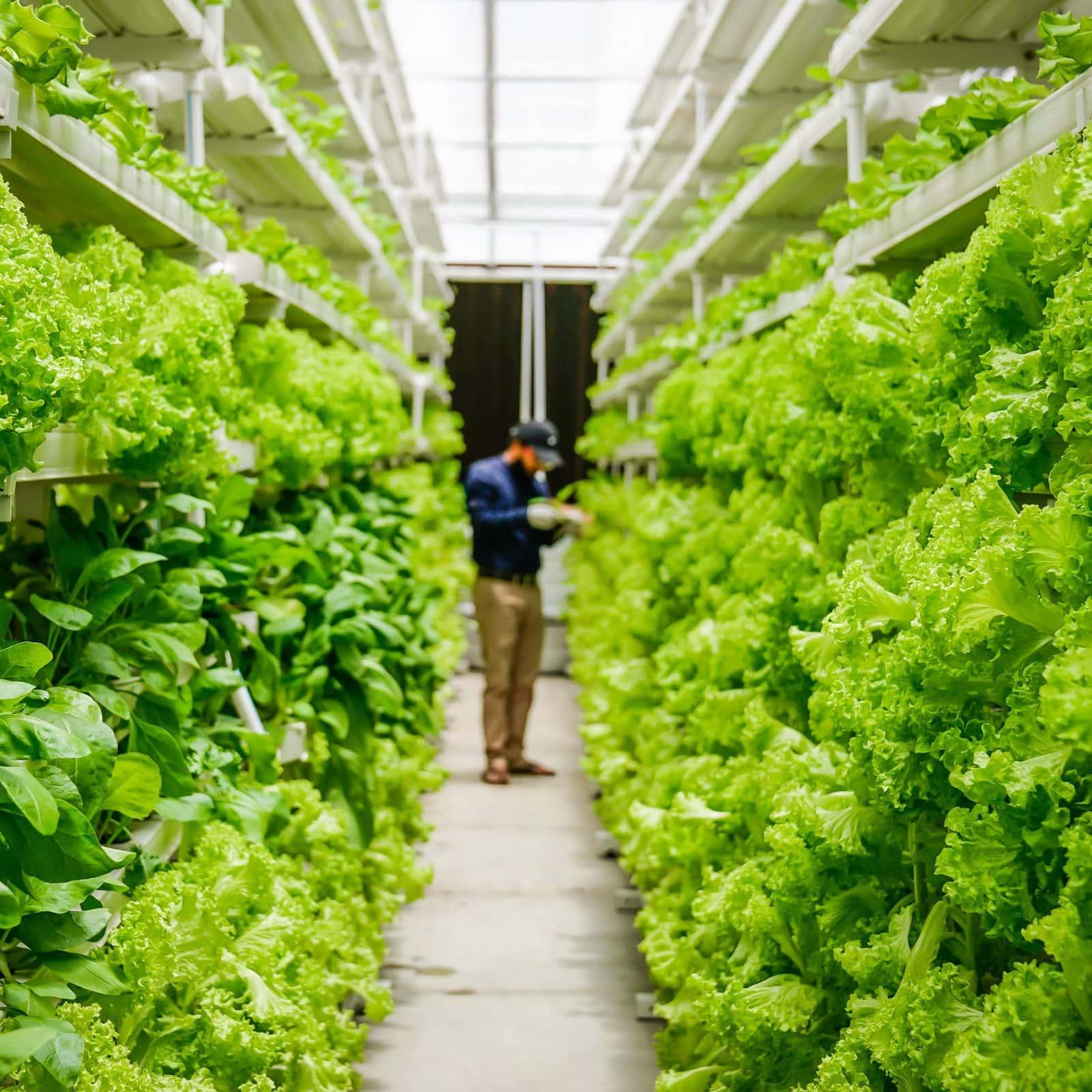 Вертикальное фермерство в Лонг-Айленде