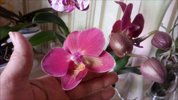 Garden Show Субстрат кокосовый для растений Орхидея