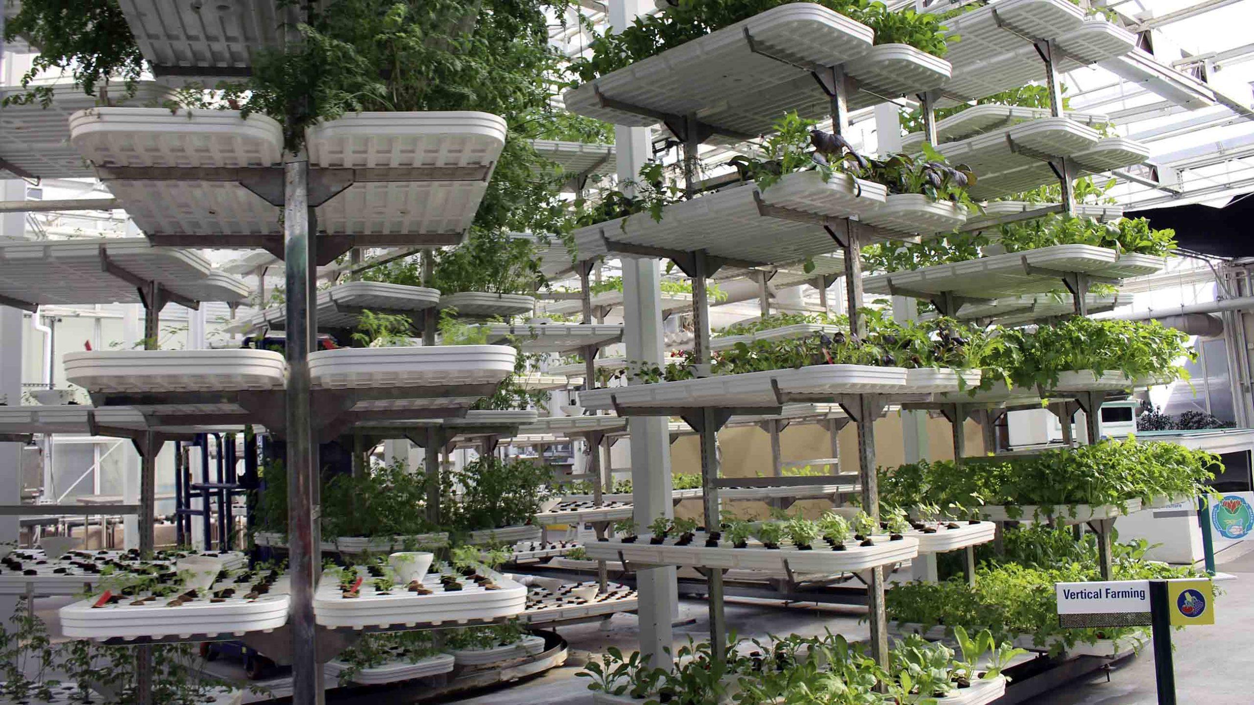 Как сити-фермы решают проблему отходов и неэффективности поставки продовольствия?