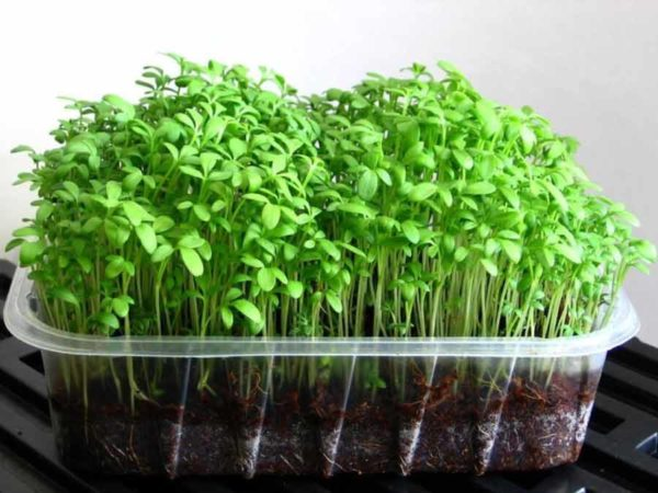 Набор для выращивания микрозелени кресс-салат Дукат. 5 урожаев