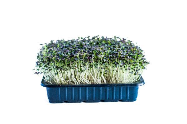 mGreens Набор для выращивания микрозелени мизуна красная. 5 урожаев