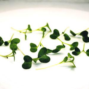 mGreens Набор для выращивания микрозелени пак-чой. 5 урожаев