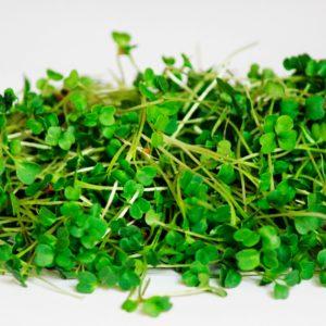 Набор для выращивания микрозелени Руккола. 5 урожаев