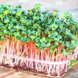 Набор для выращивания микрозелени редиса Чайна Роуз