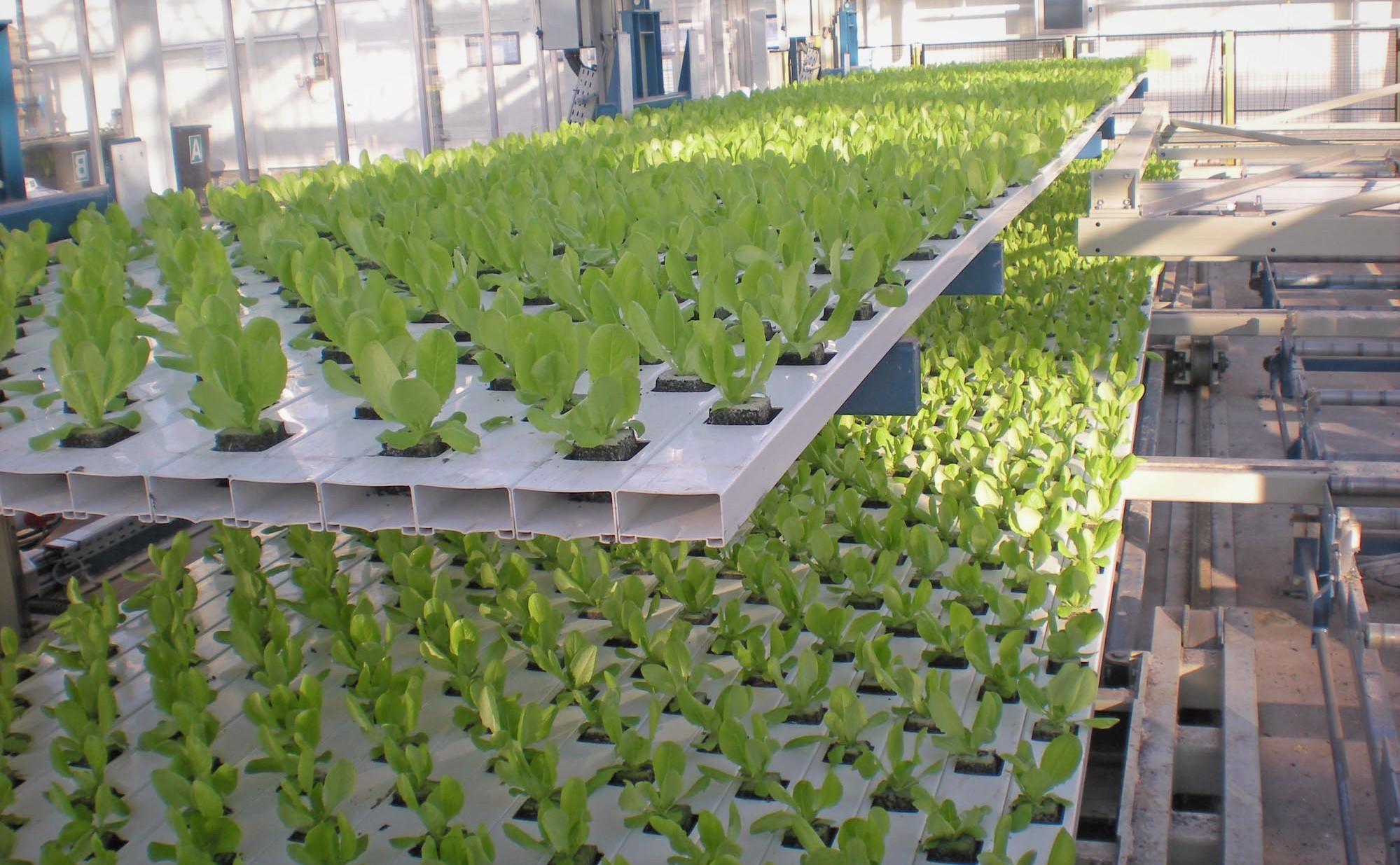 Учащихся BW обучают новым высокотехнологичным методам выращивания растений