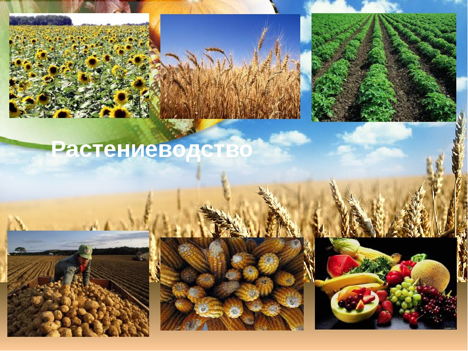 Расширеное городское растениеводство